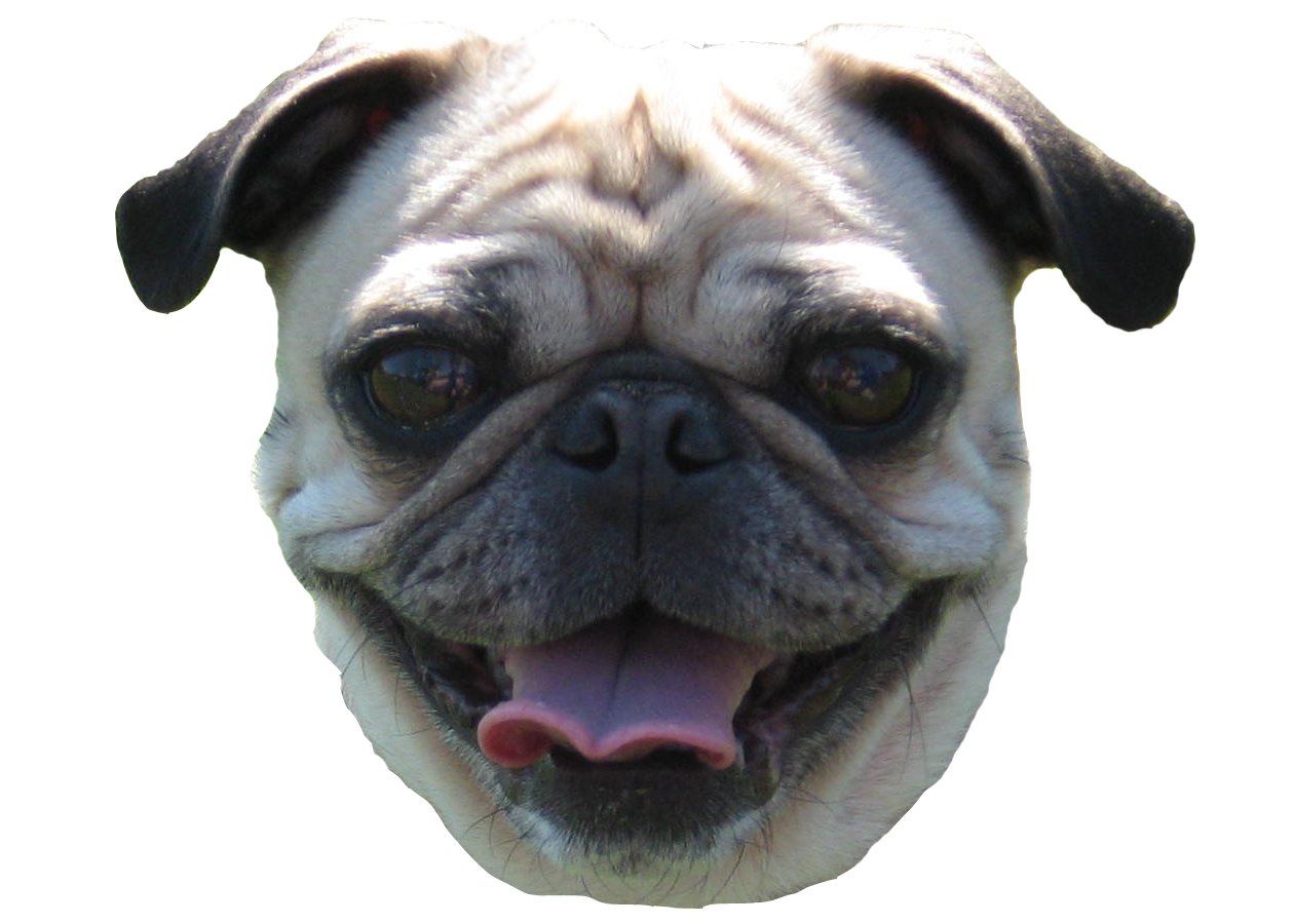Behind The Scenes How I Design Pugs Wedding Girl Problems